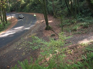4T_trail_down_from_Council_Crest_at_Fairmont